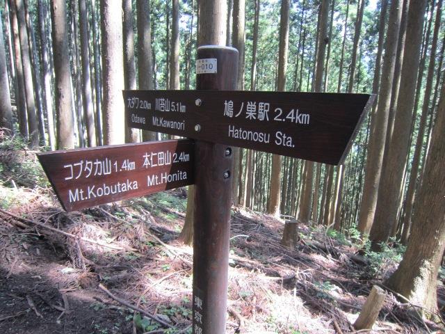 honitayama3